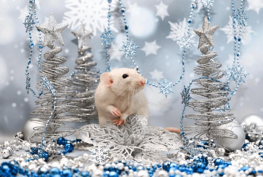 Ритуалы и приметы на год крысы
