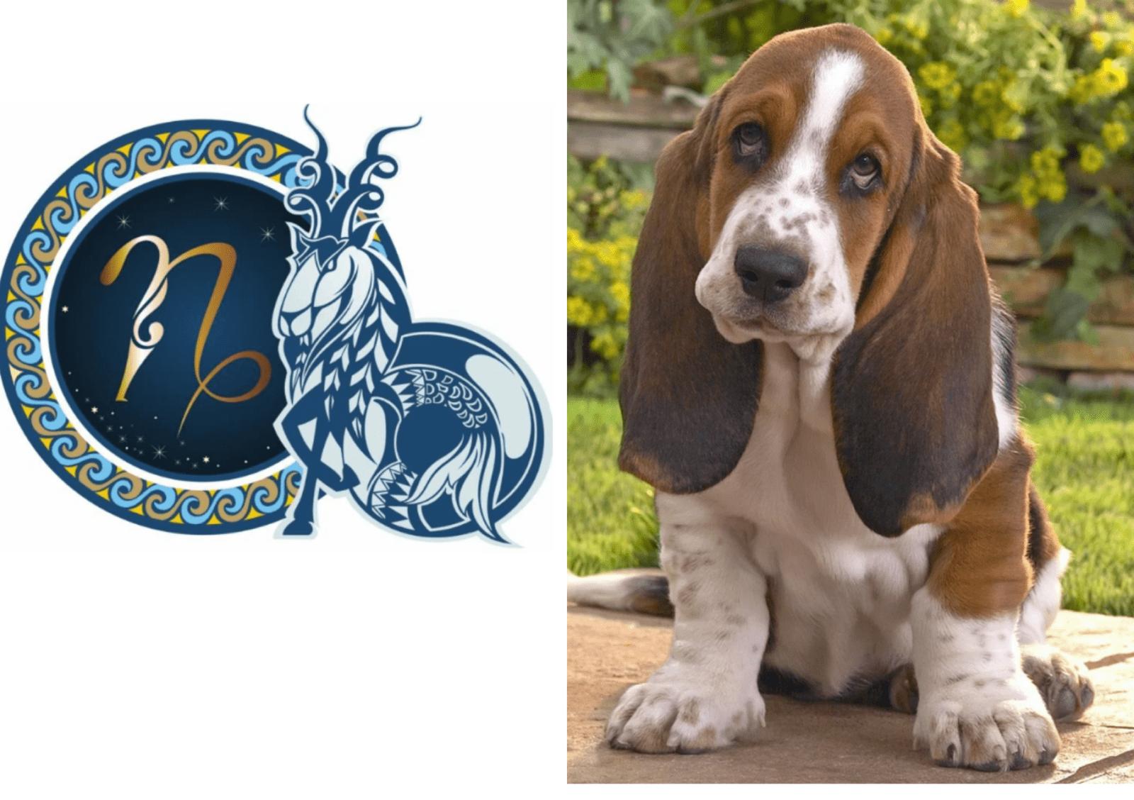 Порода собак, которая ассоциируется с каждым из знаков зодиака