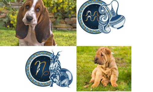 Какая порода собак вам подходит по Знаку Зодиака