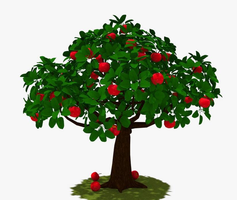 Гадание на яблоках на имя и характер будущего избранника